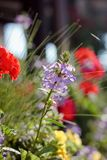 Some flowers at sunny day as landscape design elements.  Royalty Free Stock Photography