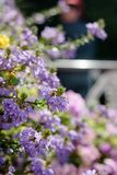 Some flowers at sunny day as landscape design elements.  Stock Images