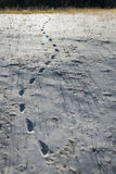 Some Footprint on snow with dried grass. 2 Royalty Free Stock Photos
