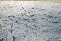 Some Footprint on snow with dried grass. 1 Stock Photo