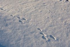 Some footprints can be seen in snow. royalty free stock images