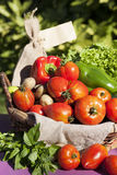 Some fresh bio vegetables Royalty Free Stock Photography