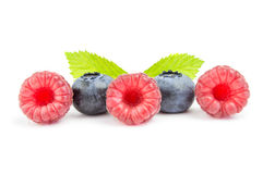 Some fresh blueberries and raspberry in row isolated on white background.  royalty free stock images