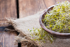 Some fresh Broccoli Sprouts Stock Photography