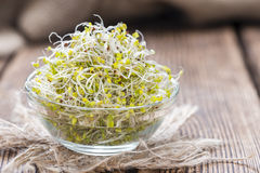 Some fresh Broccoli Sprouts. (close-up shot) on rustic wooden background Stock Photography