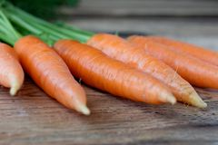 Some fresh carrots on old wooden desk. Some fresh carrots with rosette of green leaves on old wooden desk Royalty Free Stock Photos