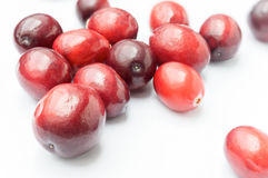 Some Fresh Cranberries on white background Stock Image