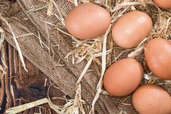 Some fresh Eggs Stock Image