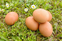 Some fresh eggs in the grass Royalty Free Stock Image