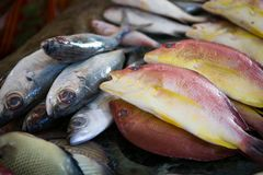 Resh fish for selling at a fish market. Some fresh fish for selling at a fish market in the south of india Royalty Free Stock Photo