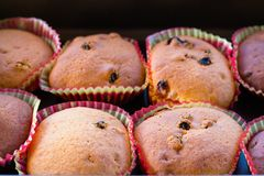Some fresh, freshly baked muffins. Muffins with raisins in colorful forms royalty free stock photo