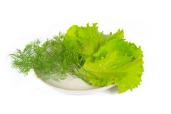 The some fresh greens Royalty Free Stock Photos