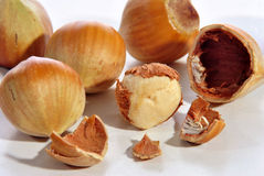 Some fresh hazelnuts Royalty Free Stock Images