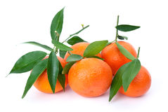Some fresh mandarines with leaves Royalty Free Stock Photo