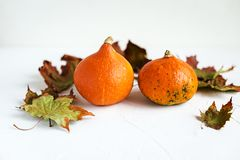 Orange pumpkins and dry leaves on white background. Some fresh orange pumpkins and dry maple leaves on white concrete background, copy space. Autumn concept royalty free stock photo