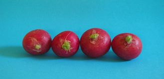 Some fresh radishes. On blue background stock photos