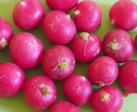 Some fresh radishes. On green background royalty free stock photography