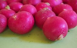 Some fresh radishes. On green background stock image