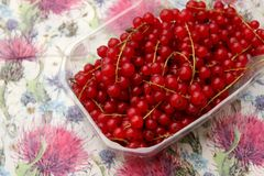 Red currants. Some fresh red currants in a plastic box Royalty Free Stock Photos