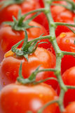 Tomatoes. Some fresh ripe cherry tomatoes on a branch Royalty Free Stock Photo