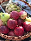 Fresh ripe red apples in a basket. Some fresh ripe red apples in a basket royalty free stock image