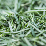 Some fresh Rosemary (close-up shot). Some fresh Rosemary (close-up shot; selective focus) on vintage wooden background Stock Image
