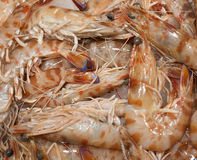Some fresh seafood. Some fresh seafood on sale at a market Stock Image