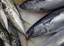 Some fresh seafood. Some fresh seafood on sale at a market Royalty Free Stock Images