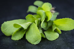 Some fresh Stevia leaves (selective focus). On a vintage looking background royalty free stock photography