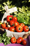Some fresh vegetables. On the table in garden royalty free stock photos