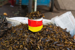 Some fried insect, Myanmar. Some fried food insects, Myanmar stock photo