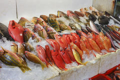 Some  frozen fish. On the ice Royalty Free Stock Image