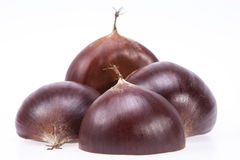 Some fruits of sweet chestnut  on white background Stock Images
