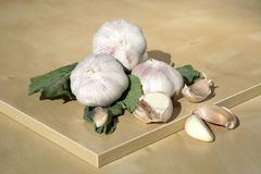 Some garlic. Some organic garlic on the table royalty free stock image