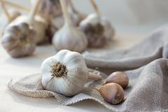 Some garlic head and clove on sackcloth. Some garlic head and clove on grey sackcloth Royalty Free Stock Images