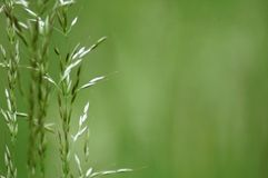 Some grass blades. On a green background Royalty Free Stock Photos