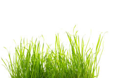 Some grass isolated on white Royalty Free Stock Images