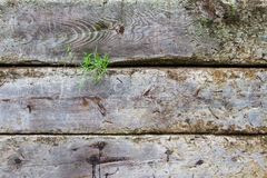 Some grass popping from Timber fence. Part of a fence with green grass is poping. Wood details are clearly visible. Nice degraded colors Stock Photography