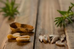 Some green branches and some seeds on a wooden rustic board stock photos