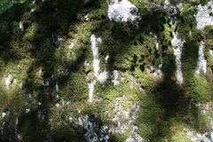Some moss on a rock. Some green moss on a rock Royalty Free Stock Images
