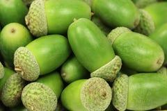 Some green oak acorns close up  background. Some green oak acorns close up abstract background Stock Photos