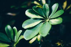 Some green plants in the darkness. Some green plants in one of the most darkness nights I ever seen royalty free stock photography