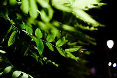 Some green plants in the darkness. Some green plants in one of the most darkness nights I ever seen stock images