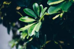 Some green plants in the darkness. Some green plants in one of the most darkness nights I ever seen stock photo