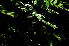 Some green plants in the darkness. Some green plants in one of the most darkness nights I ever seen stock image