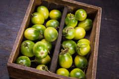 Some green tomatoes. In dish on wooden background Royalty Free Stock Photos
