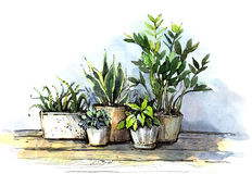 Some greens. A few plants in pots drawn by hand with watercolors and inks Royalty Free Stock Photo