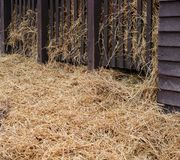 Some hay in a barn. Some fresh, yellow hay in a barn stock image