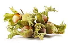 Some hazelnuts Stock Photos