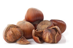 Some hazelnuts. Heap of hazelnuts isolated over white background stock image